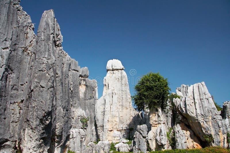 Het bos van de steen royalty-vrije stock afbeelding