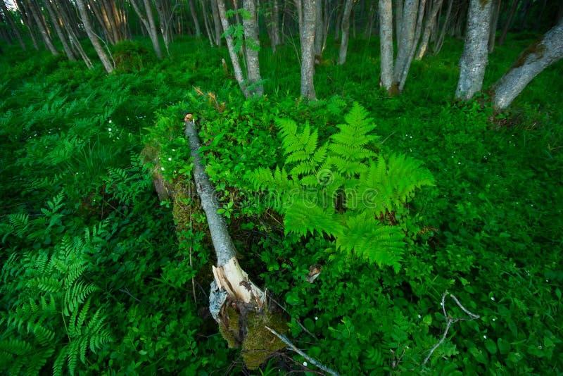 Het bos van de varen royalty-vrije stock foto's