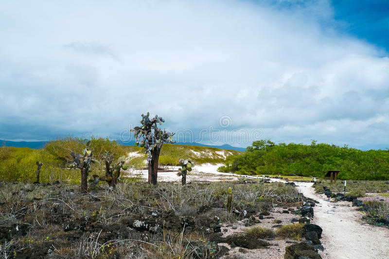 Het bos van de vijgencactuscactus royalty-vrije stock foto