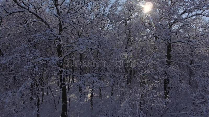 Het bos van de vluchtwinter in Sneeuw stock foto's