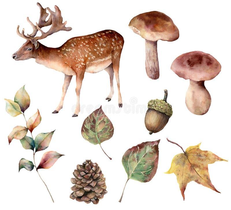 Het bos van de waterverfherfst met hertenreeks De hand schilderde geïsoleerde denneappel, eikel, hazen, paddestoel, gele bladeren royalty-vrije illustratie