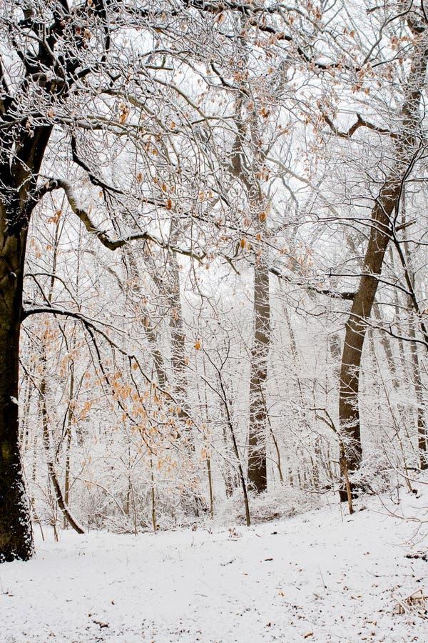 Download Het bos van de winter stock foto. Afbeelding bestaande uit ijzig - 10782972