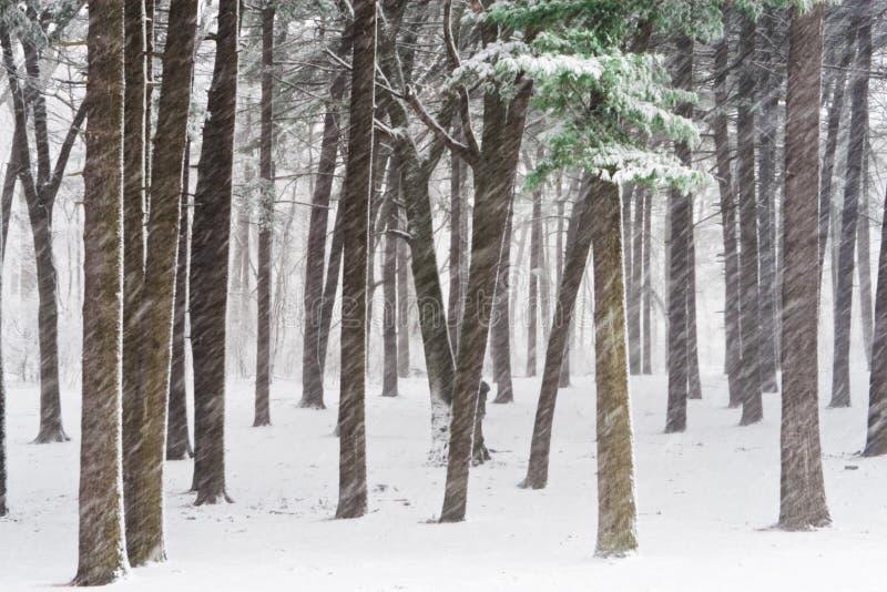 Download Het bos van de winter stock afbeelding. Afbeelding bestaande uit ochtend - 10782989