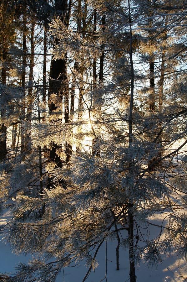 Het bos van de winter stock afbeelding