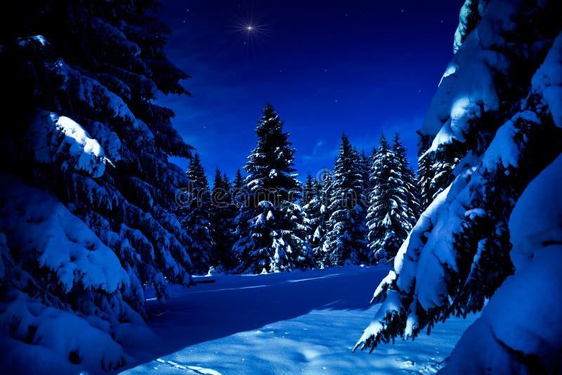 Het bos van de winter bij nacht royalty-vrije stock foto