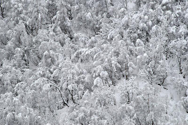 Het bos van de winter met sneeuw. royalty-vrije stock afbeelding