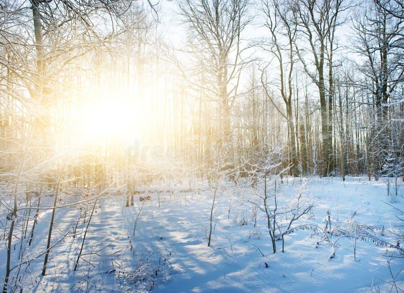 Het bos van de winter toneel royalty-vrije stock fotografie
