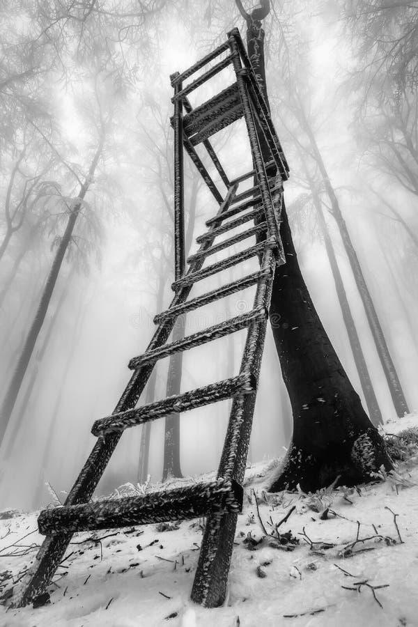Het bos van de de winterbeuk royalty-vrije stock fotografie