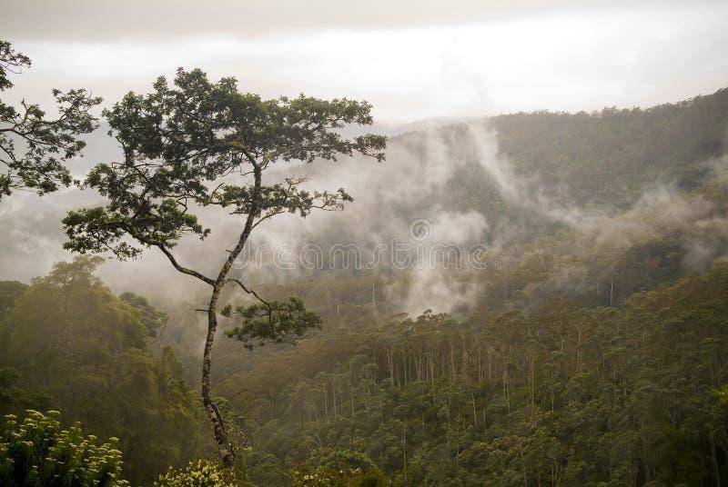 Het Bos van de wolk royalty-vrije stock fotografie