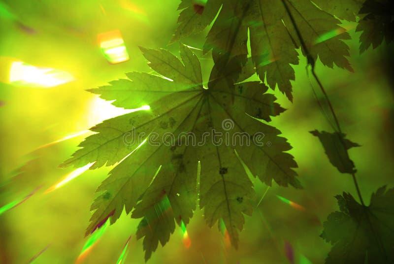 Het bos van de zomer, regenboogstralen stock afbeelding