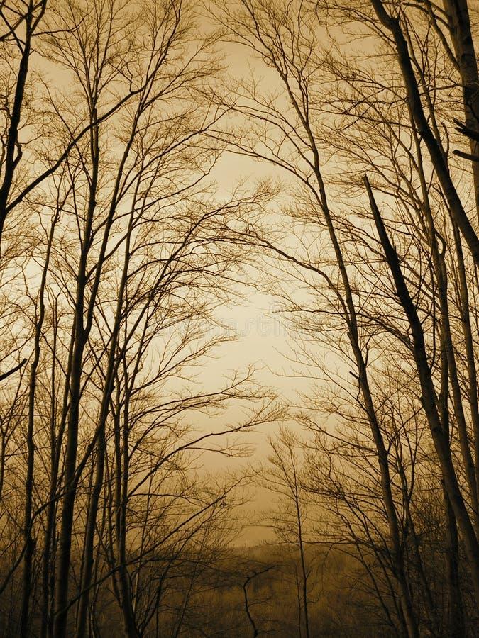 Het bos van de zonsondergang stock foto