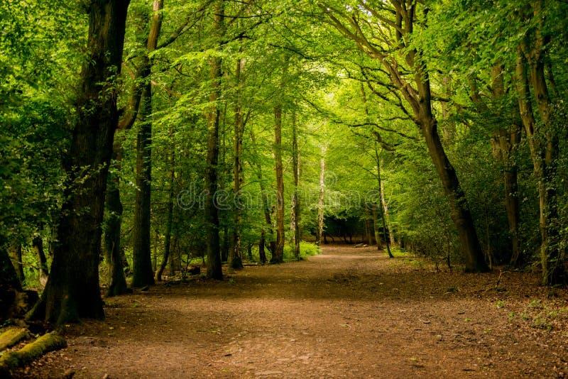 Het Bos van Epping stock fotografie