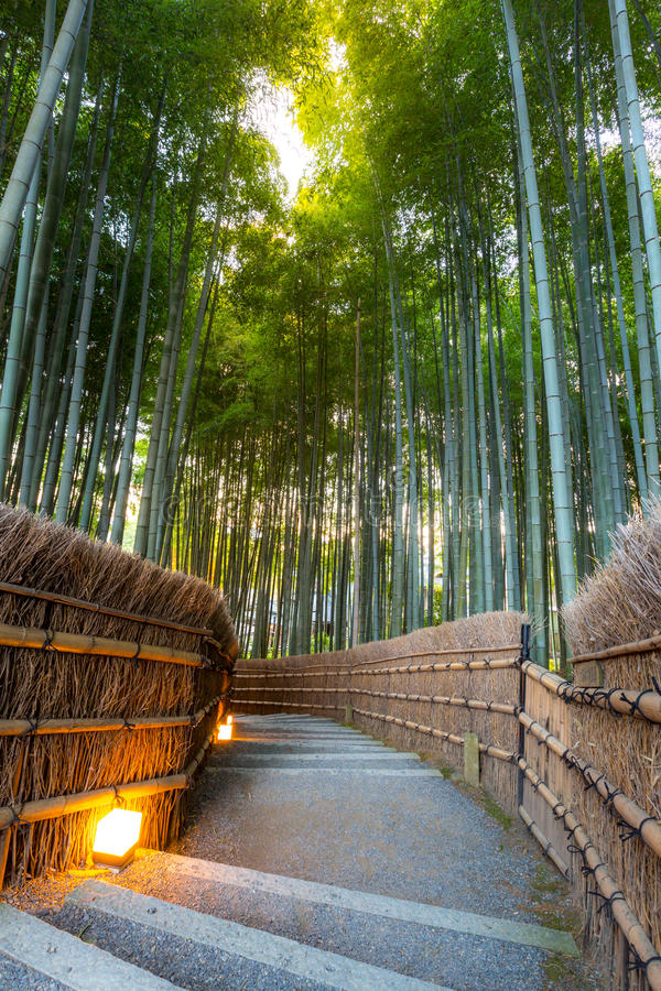 Het bos van het Arashiyamabamboe stock foto's
