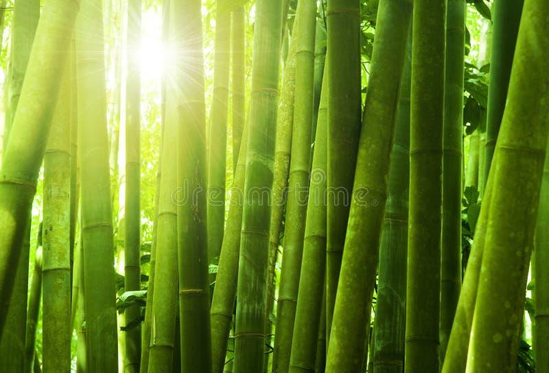 Het bos van het bamboe stock foto