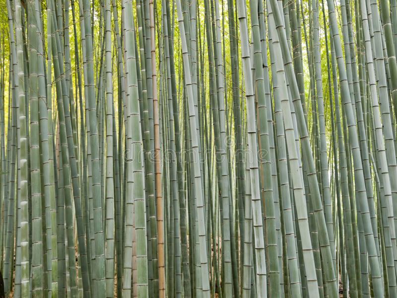 Het Bos van het bamboe op het gebied van Kyoto Arashiyama royalty-vrije stock afbeelding