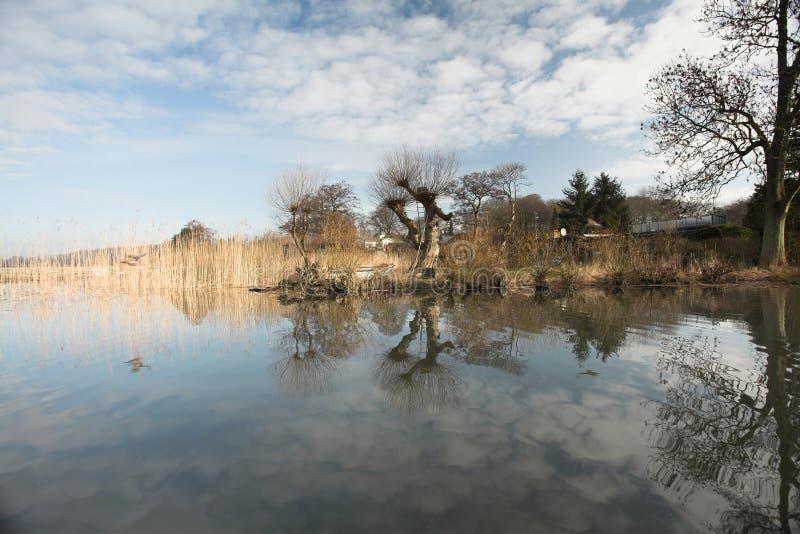 Het bos van het meer royalty-vrije stock fotografie