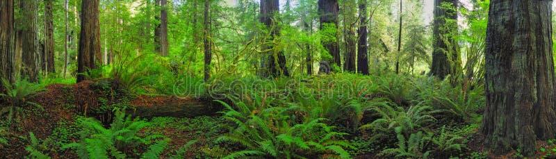 Het bos van het panorama royalty-vrije stock foto's
