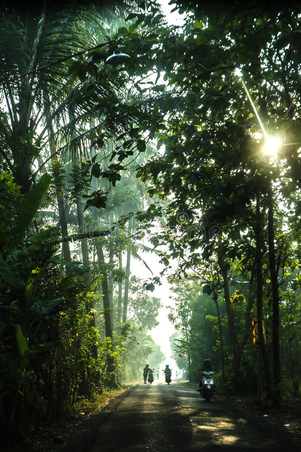 Het bos van Indonesië stock foto's