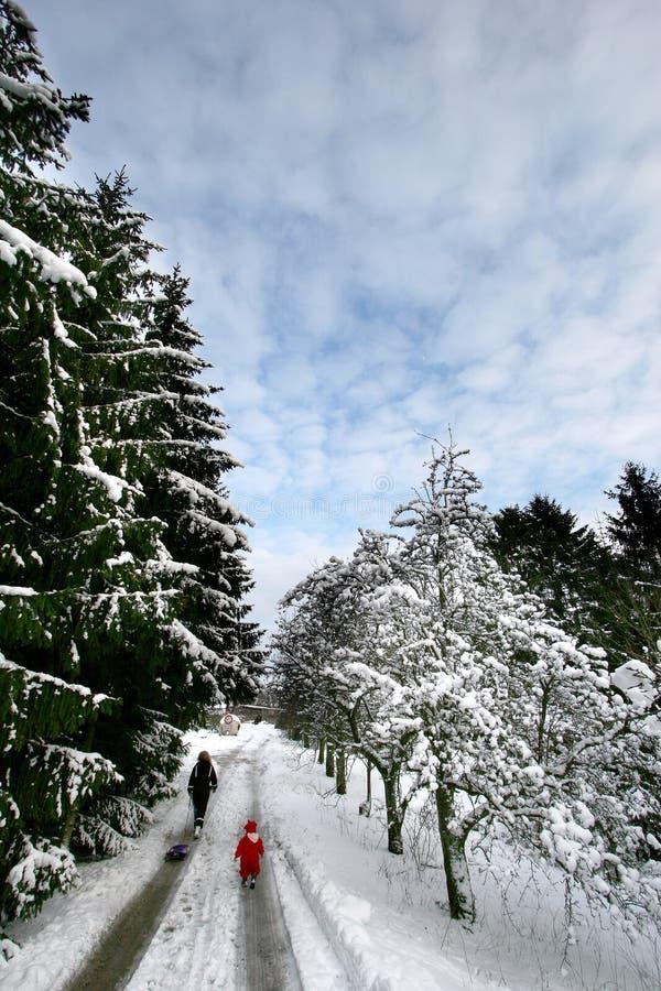 Het bos van Kerstmis stock afbeeldingen