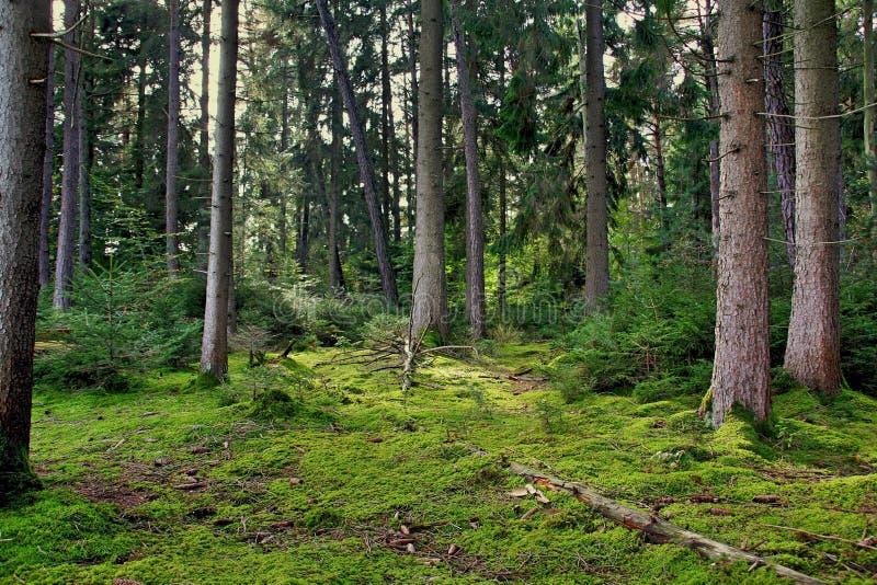 Het bos van Nice royalty-vrije stock afbeelding