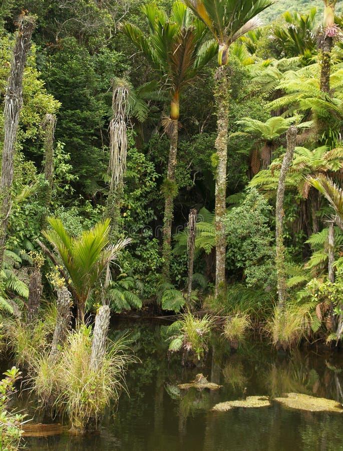 Het bos van Nieuw Zeeland stock afbeeldingen
