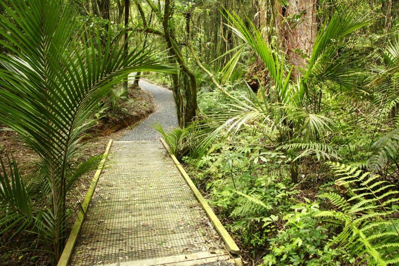 Het bos van Nieuw Zeeland royalty-vrije stock afbeeldingen
