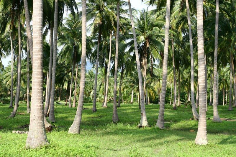 Het bos van palmen royalty-vrije stock foto's