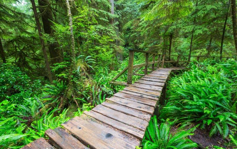 Het bos van Vancouver royalty-vrije stock afbeelding