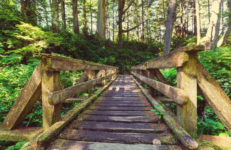 Het bos van Vancouver royalty-vrije stock fotografie