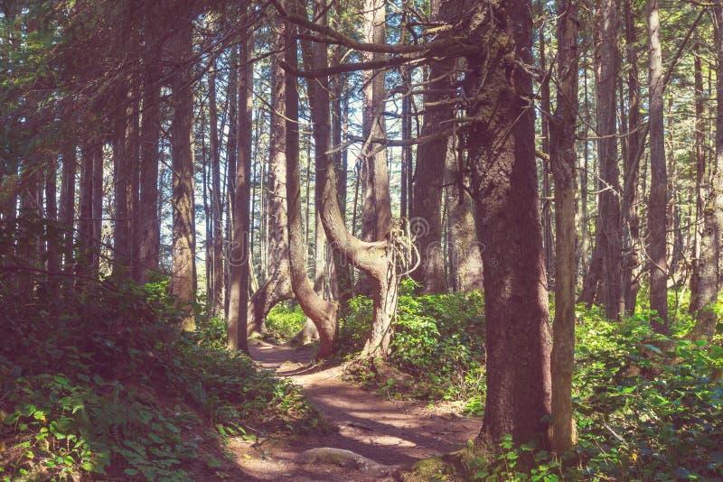 Het bos van Vancouver royalty-vrije stock foto's