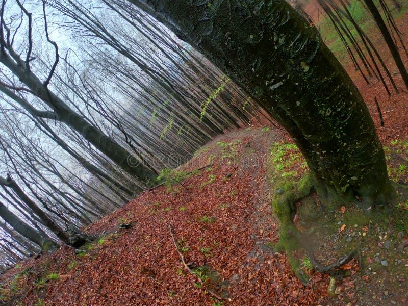 Het bos van het wildernislandschap met bomen en mos op rotsen royalty-vrije stock afbeelding