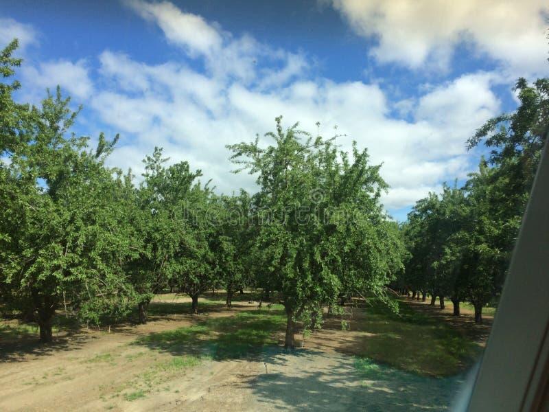 Het Bosje van Californië royalty-vrije stock foto's