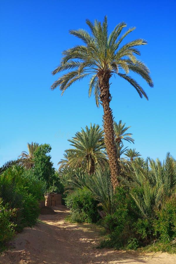 Het bosje van de palm in Marokko royalty-vrije stock afbeeldingen