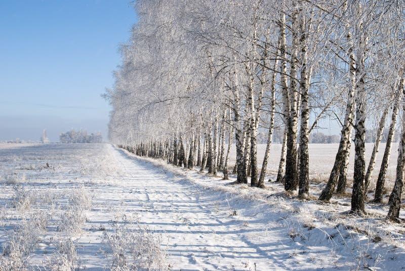 Het bosje van de winter stock foto