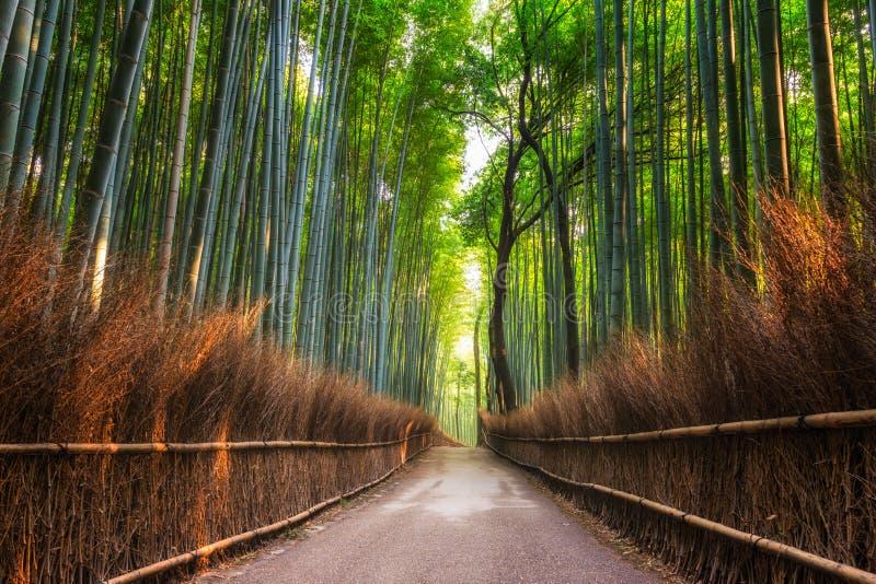 Het Bosje van het Arashiyamabamboe royalty-vrije stock foto