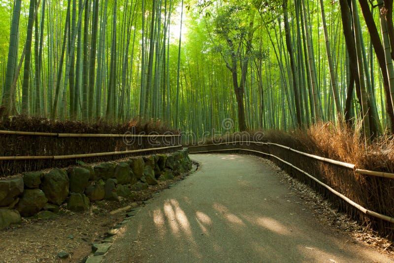 Het bosje van het bamboe royalty-vrije stock foto's