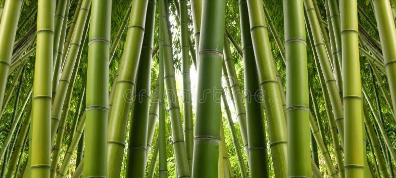 Het Bosje van het bamboe royalty-vrije stock afbeelding