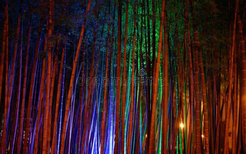 Het bosje van het bamboe royalty-vrije stock foto