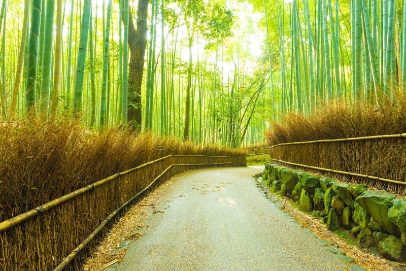 Het Bosjeochtend die van het Arashiyamabamboe Weg H verdraaien royalty-vrije stock foto's