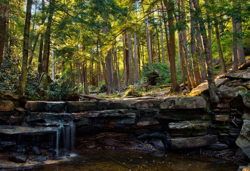 Het boslandschap slikt binnen het Park van de Kreekstaat, Maryland stock fotografie