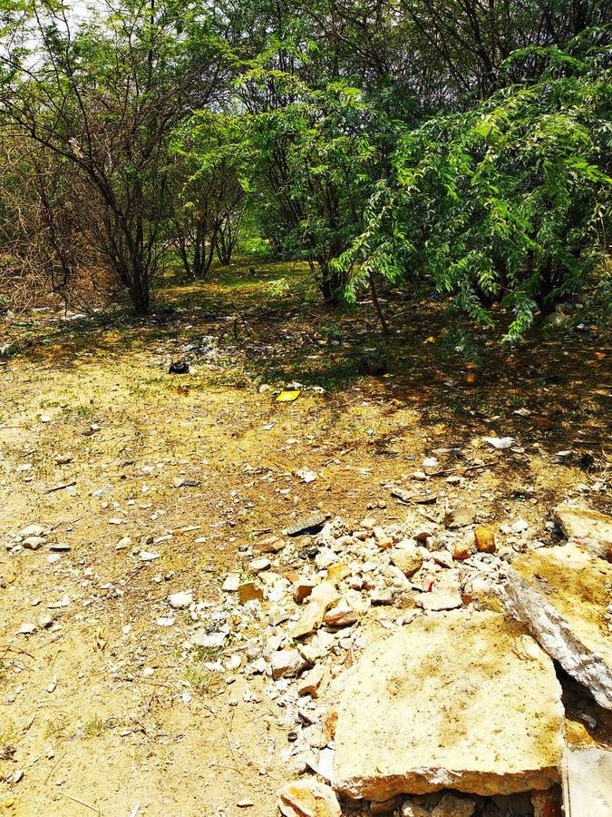 Het bosleven van Zuid-India stock foto