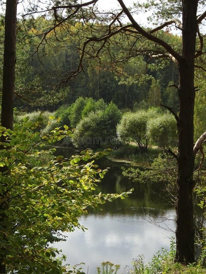 Het bosmeer royalty-vrije stock afbeelding