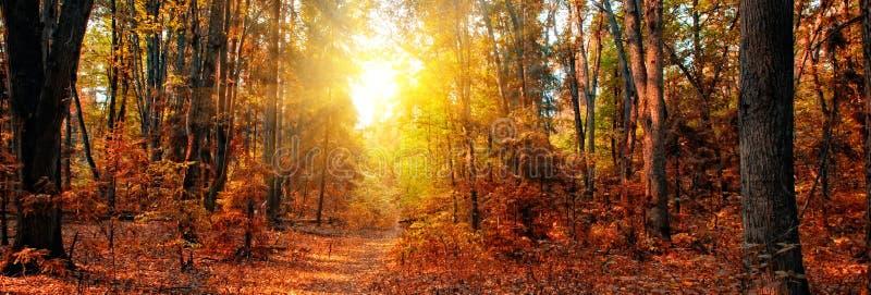 Het bospanorama van de herfst royalty-vrije stock afbeelding