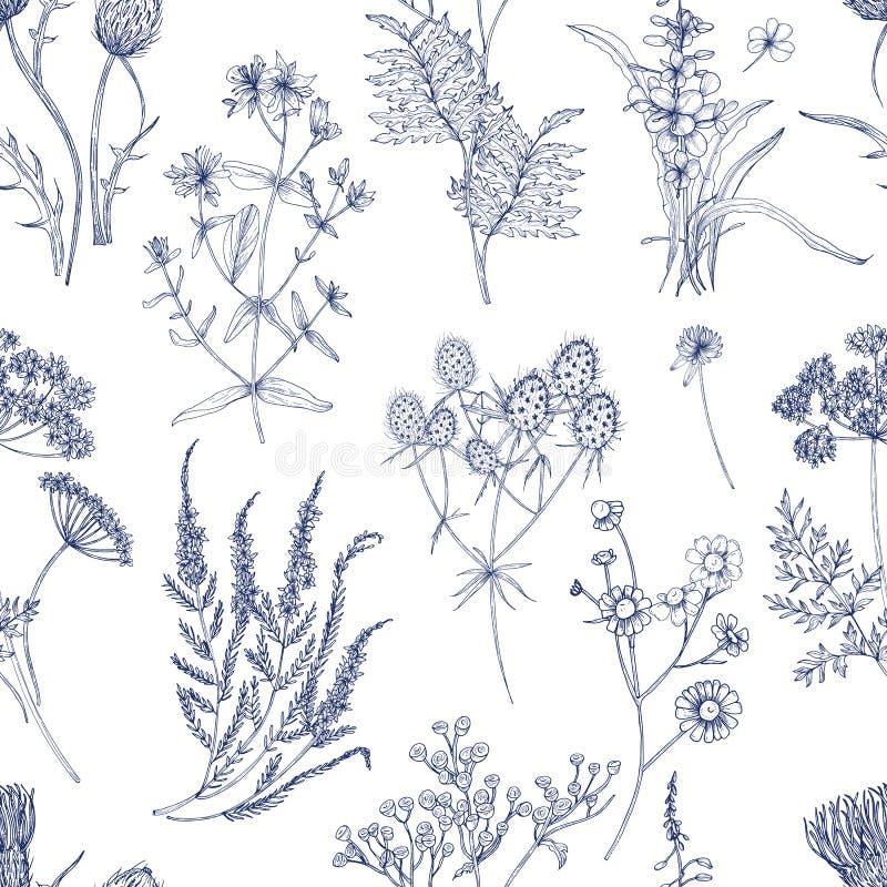Het botanische naadloze patroon met weidekruiden, de bloeiende installaties en de bloeiende wilde bloemen overhandigen getrokken  royalty-vrije illustratie
