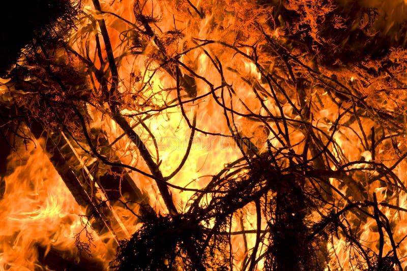 Het branden van bos stock afbeelding