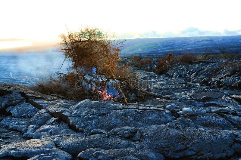 Het Branden van de boom op de Stroom van de Lava royalty-vrije stock foto's