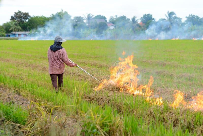 Het branden van de landbouwers van het strostoppelveld wanneer de oogst volledig is stock foto's
