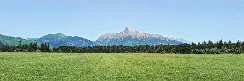 Het brede panorama van groene weide met klein bos en zet hierboven op Krivan-piek - Slowaaks symbool - in afstand, duidelijke hem royalty-vrije stock afbeelding