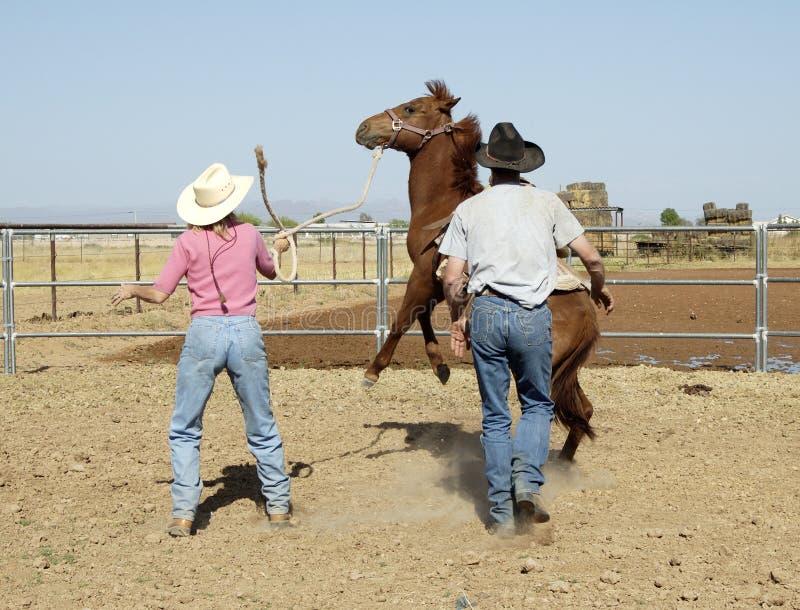 Het breken van een jong paard royalty-vrije stock foto's