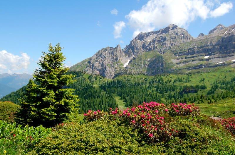 Het brenta-Dolomiet Italië van de berg stock foto
